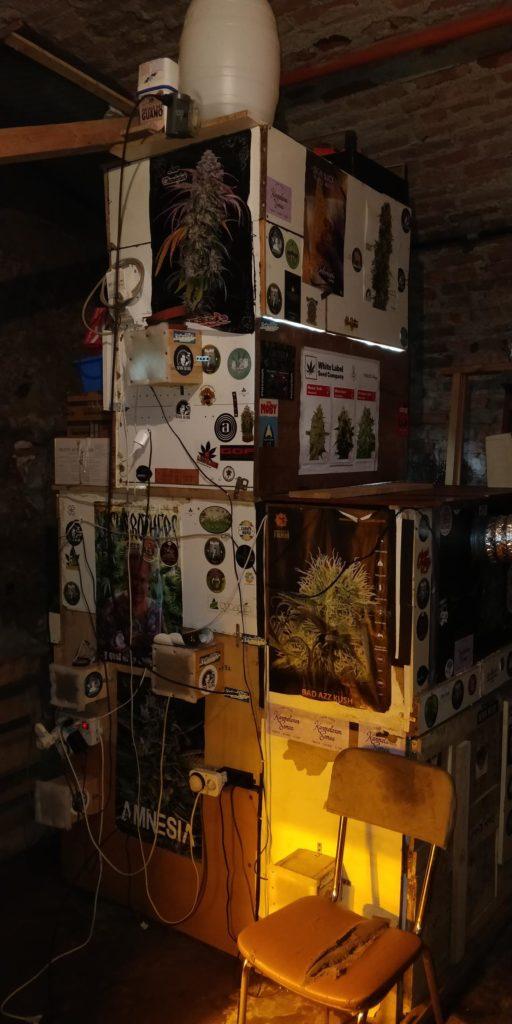 Torino coltivava marijuana in casa con musica classica e for Casa discografica musica classica