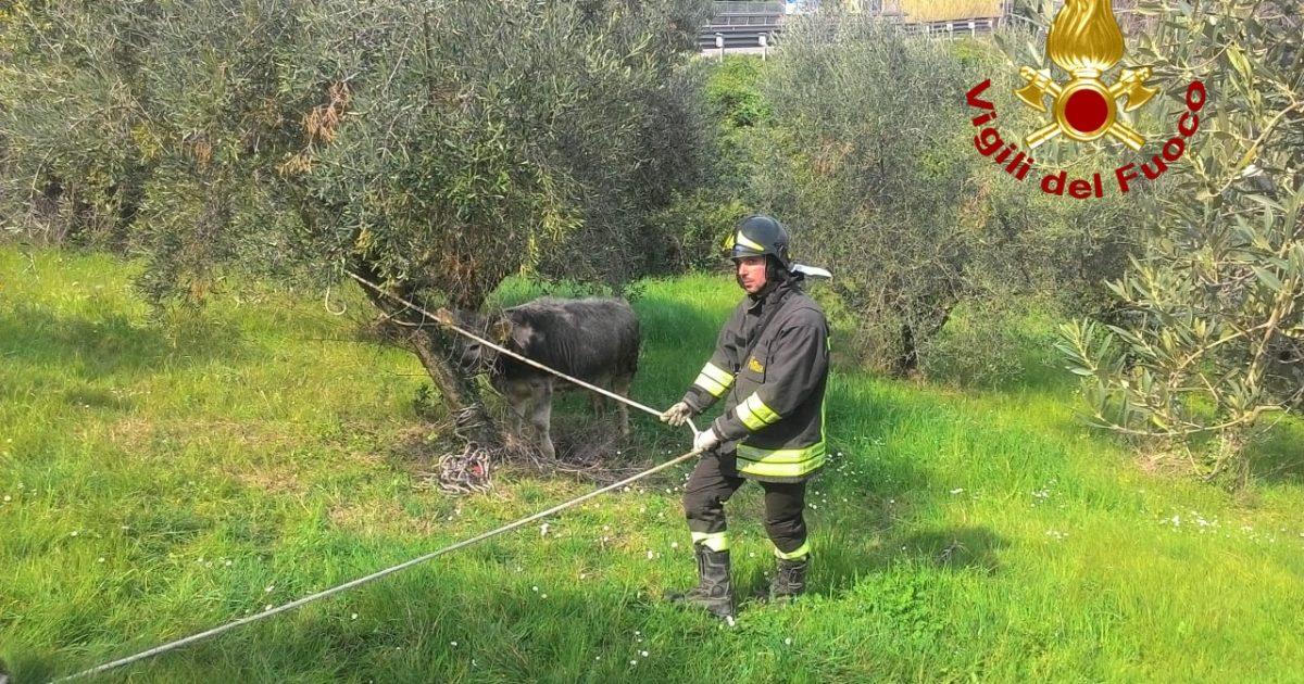 """< img src=""""https://www.la-notizia.net/vitello"""" alt=""""vitello"""""""