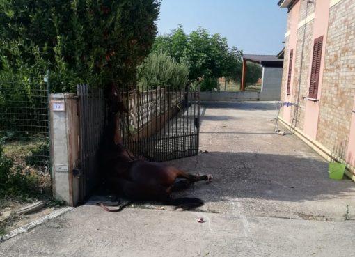 "< img src=""https://www.la-notizia.net/cavallo"" alt=""cavallo"""