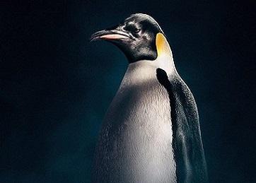 il pinguino imperatore